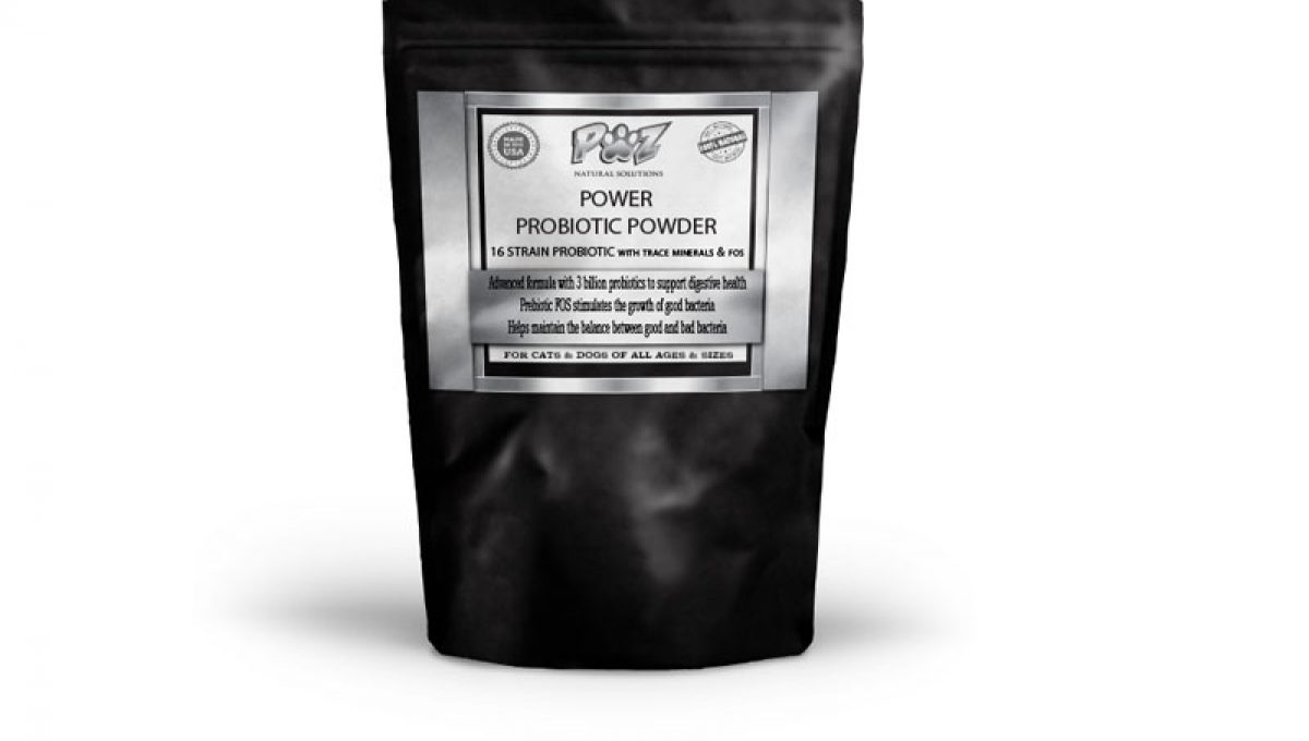 Probiotics for Dogs | Transform K9 Probiotic - Part 4 - Advanced Formula With 3 Billion Probiotics, 1 lb (16 oz)