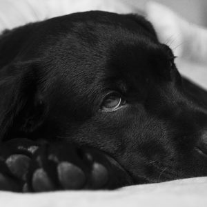 Effective Treatment & Recovery for Parvo in Dogs